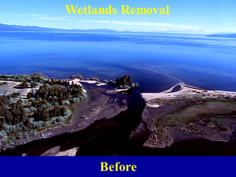 Wetlands Removal Before