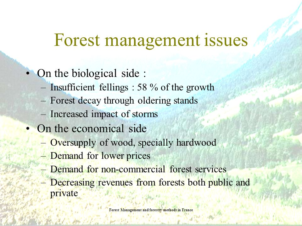 Forest Management and forestry methods in France Forest balance Annual total yield 100 millions m3 Annual total yield 100 millions m3 Annual total felling 58 millions m3 Annual total felling 58 millions m3 Source : IFN 2004 AGRESTE 2003