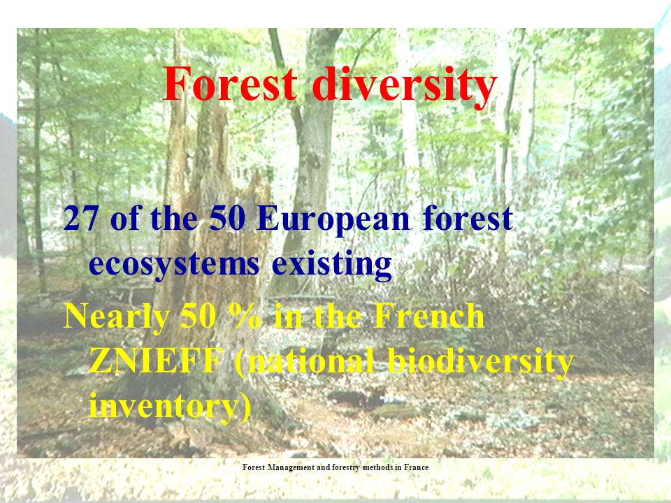 Forest Management and forestry methods in France French forests are the most diversified in Europe 126 different tree species Continental, oceanic, Mediterranean, alpine, tempered and tropical habitats Forest types diversity