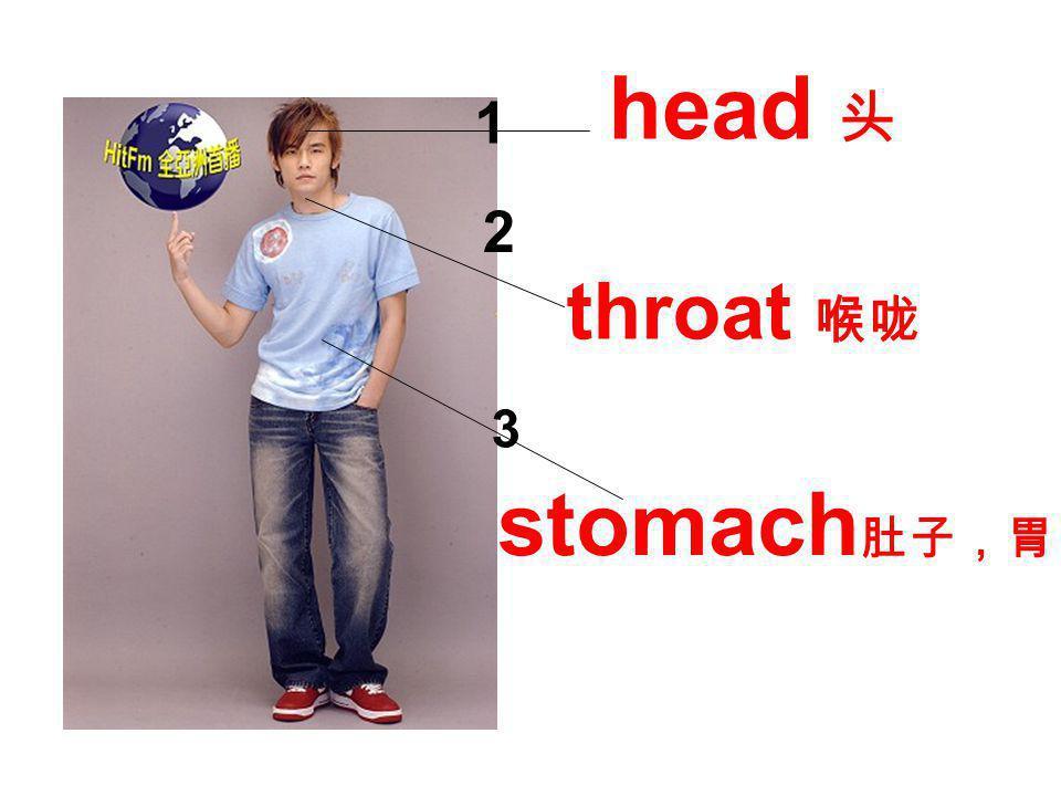 head 头 stomach 肚子,胃 throat 喉咙 1 2 3