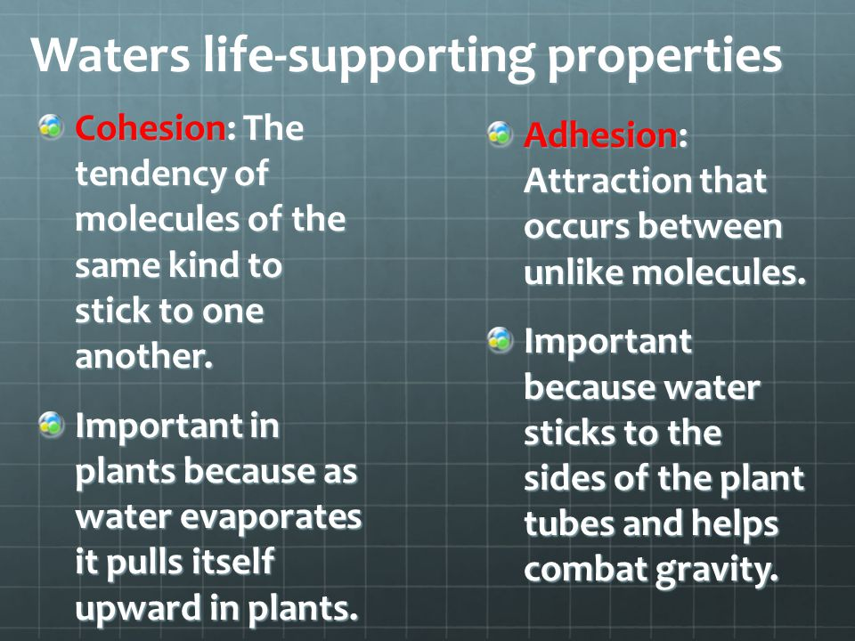 Waters life-supporting properties Cohesion: The tendency of molecules of the same kind to stick to one another. Important in plants because as water e