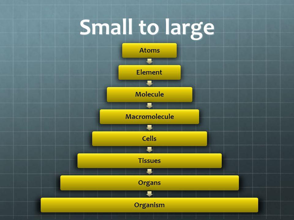 Small to large AtomsElementMoleculeMacromoleculeCellsTissuesOrgansOrganism