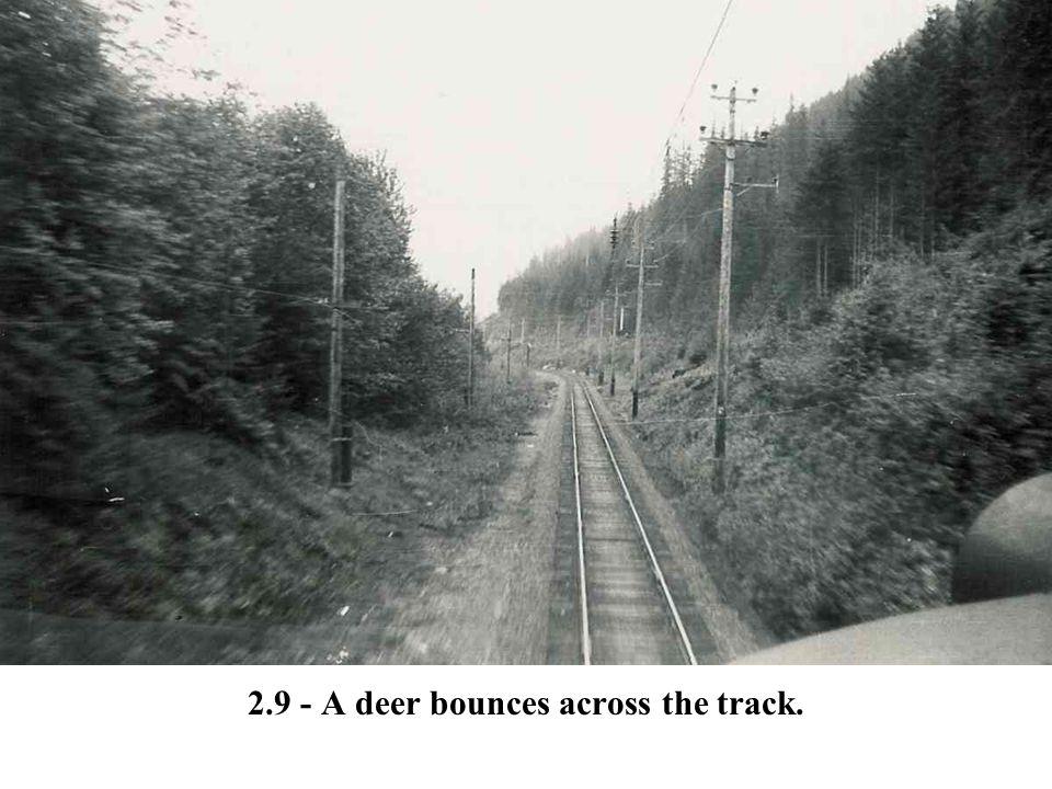 2.9 - A deer bounces across the track.