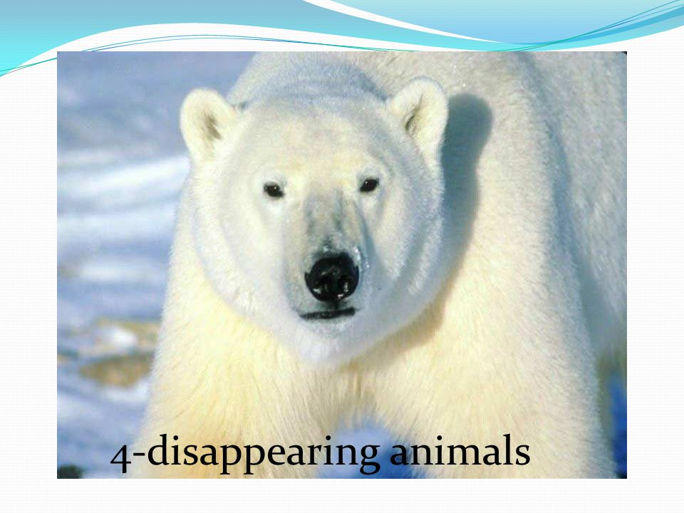 4-disappearing animals