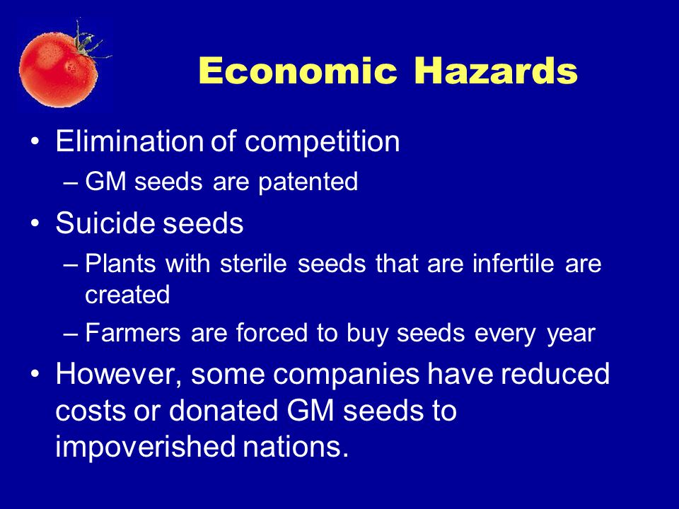 Economic Hazards Elimination of competition –GM seeds are patented Suicide seeds –Plants with sterile seeds that are infertile are created –Farmers ar