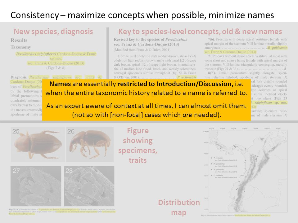 Consistency – maximize concepts when possible, minimize names Key to species-level concepts, old & new names Distribution map Figure showing specimens, traits New species, diagnosis Names are essentially restricted to Introduction/Discussion, i.e.