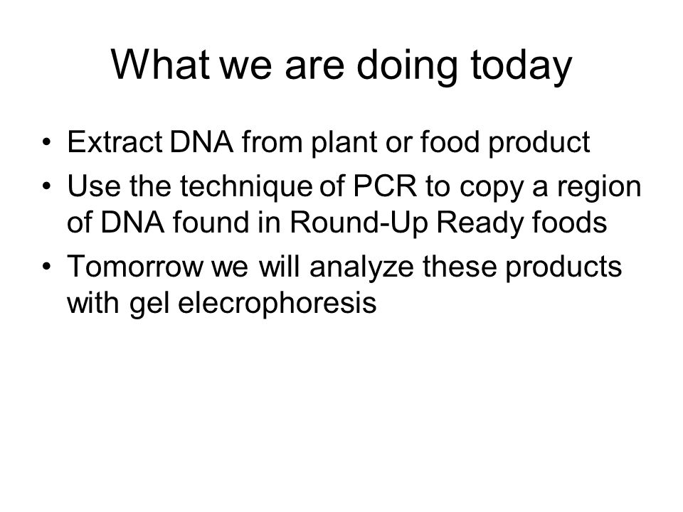 What we are doing today Extract DNA from plant or food product Use the technique of PCR to copy a region of DNA found in Round-Up Ready foods Tomorrow