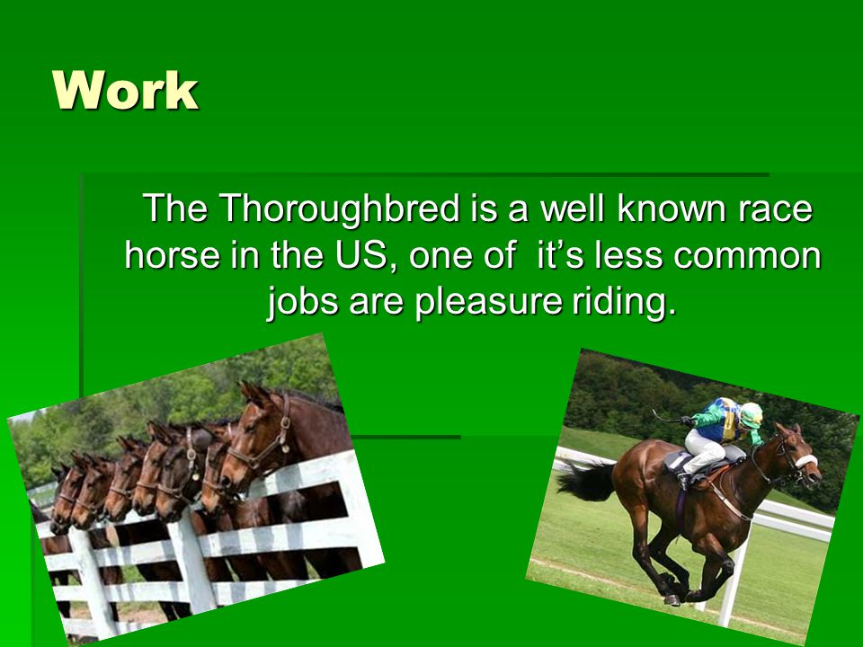 Work The Thoroughbred is a well known race horse in the US, one of it's less common jobs are pleasure riding.