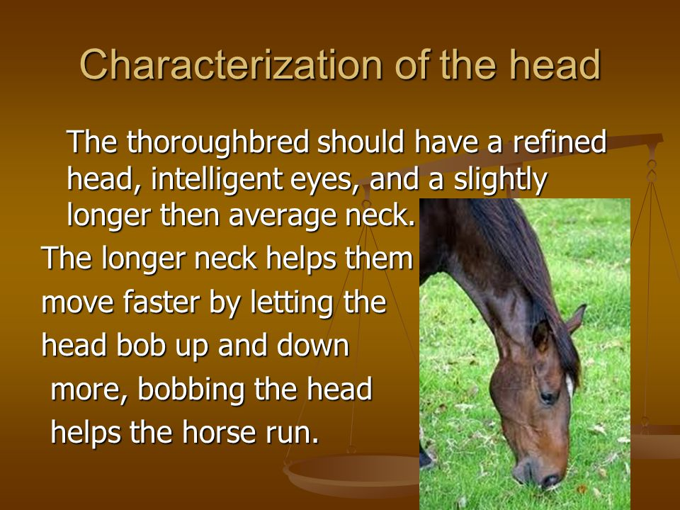 Characterization of the head The thoroughbred should have a refined head, intelligent eyes, and a slightly longer then average neck. The longer neck h
