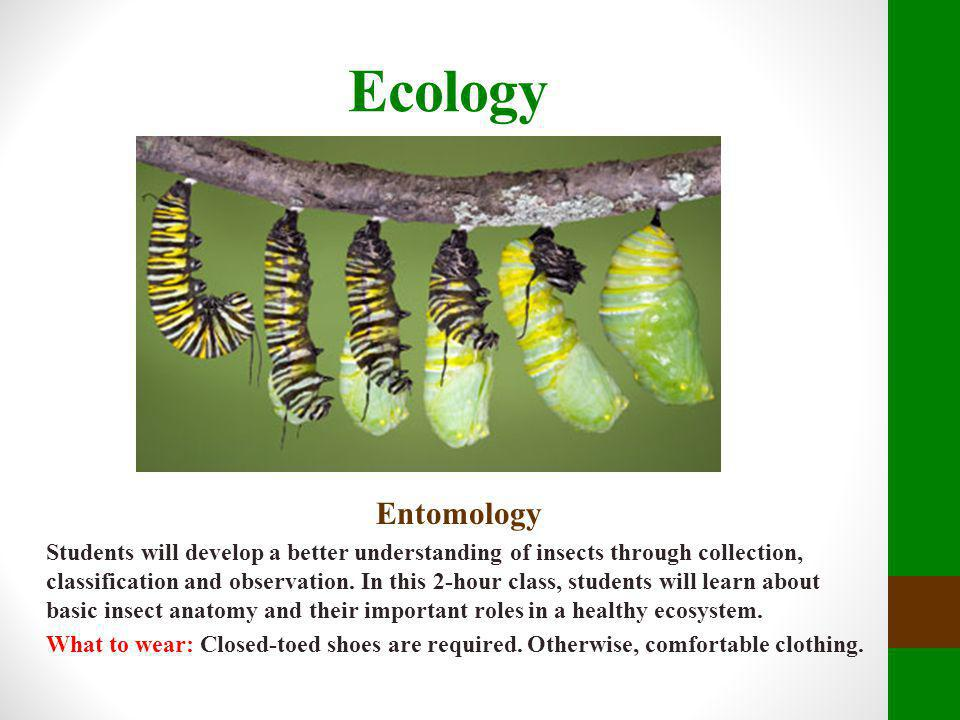 Ecology Entomology Students will develop a better understanding of insects through collection, classification and observation. In this 2-hour class, s