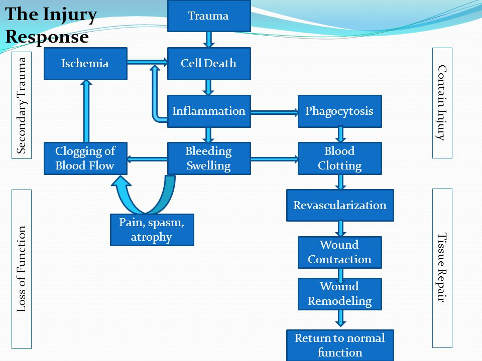 Cell Death Pain, spasm, atrophy Wound Remodeling Wound Contraction Revascularization PhagocytosisInflammation Blood Clotting Clogging of Blood Flow Is