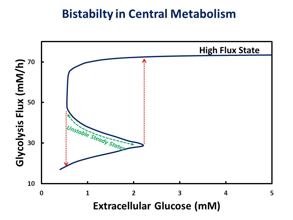 Bistabilty in Central Metabolism Unstable Steady States High Flux State