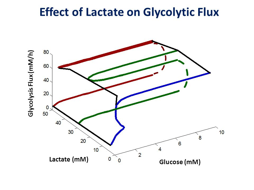 Effect of Lactate on Glycolytic Flux Lactate (mM) Glucose (mM) Glycolysis Flux (mM/h)