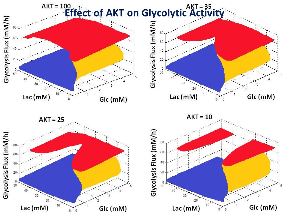 Effect of AKT on Glycolytic Activity