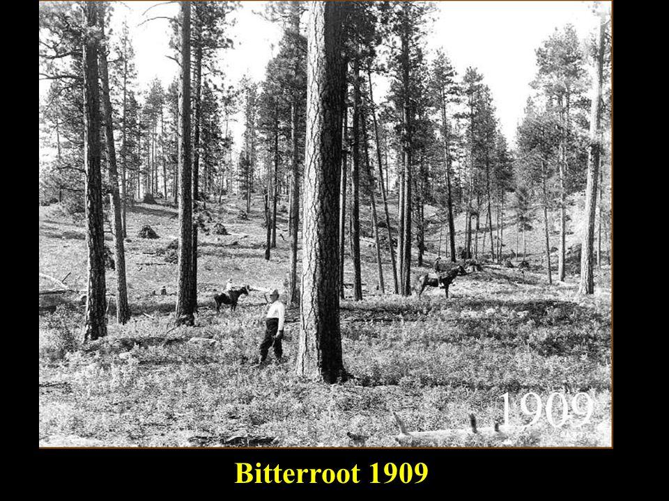 master Bitterroot 1909