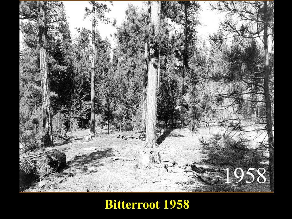master Bitterroot 1958