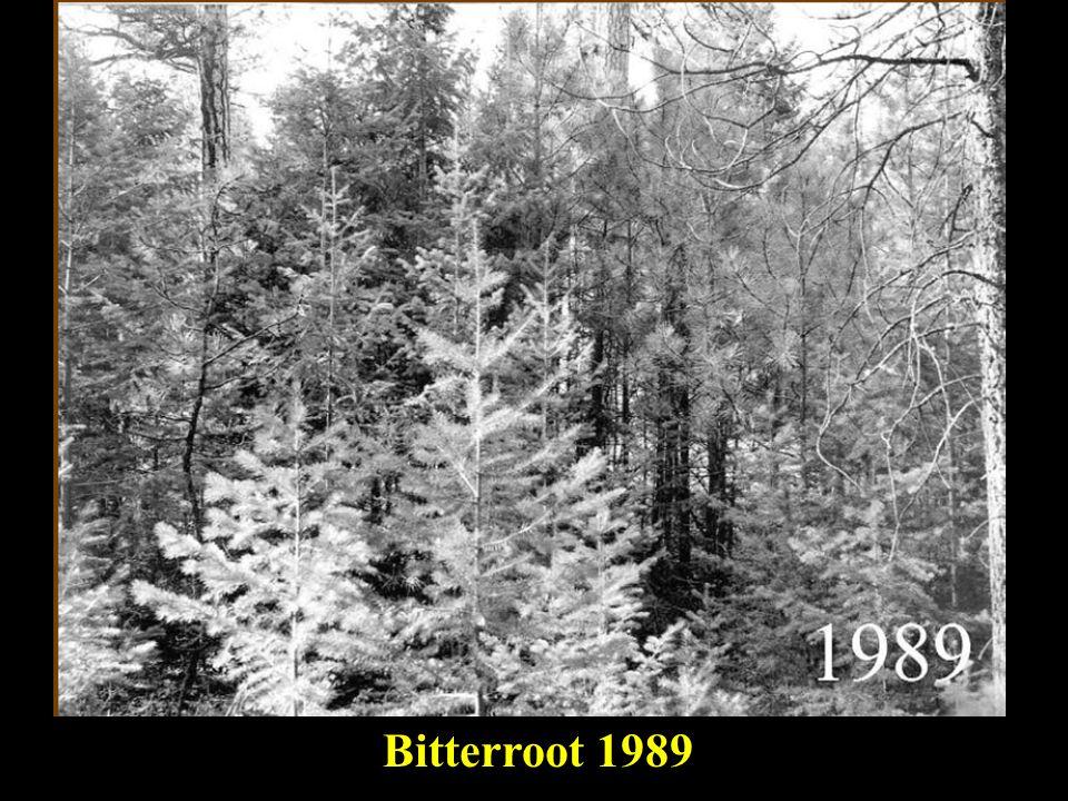 master Bitterroot 1989