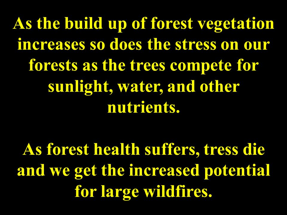 As the build up of forest vegetation increases so does the stress on our forests as the trees compete for sunlight, water, and other nutrients.