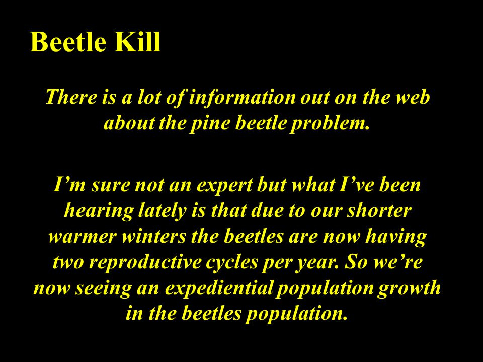 Beetle Kill There is a lot of information out on the web about the pine beetle problem.
