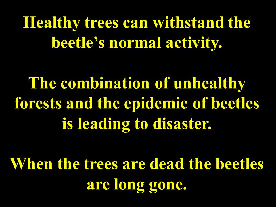 Healthy trees can withstand the beetle's normal activity.