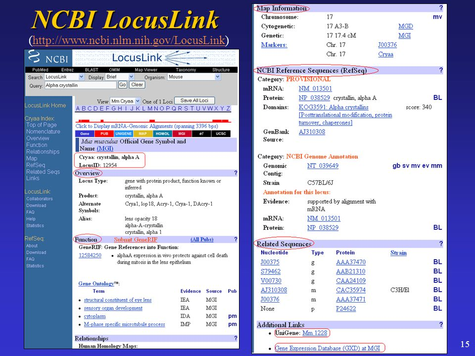 15 NCBI LocusLink (http://www.ncbi.nlm.nih.gov/LocusLink)http://www.ncbi.nlm.nih.gov/LocusLink
