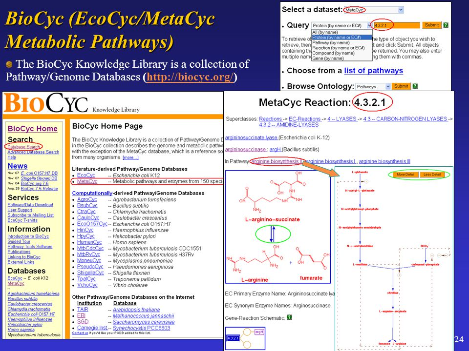 24 BioCyc (EcoCyc/MetaCyc Metabolic Pathways) The BioCyc Knowledge Library is a collection of Pathway/Genome Databases (http://biocyc.org/)http://bioc