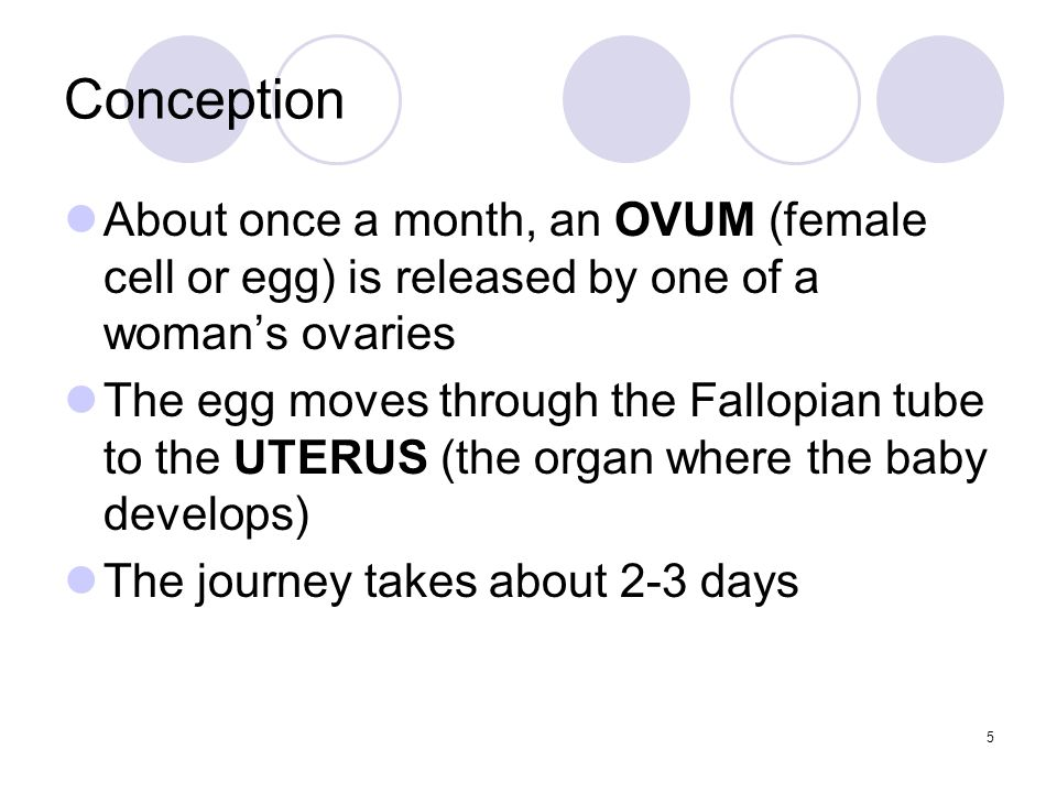 Conception When the egg reaches the uterus, it usually disintegrates and is flushed out of the body with the menstrual flow 6