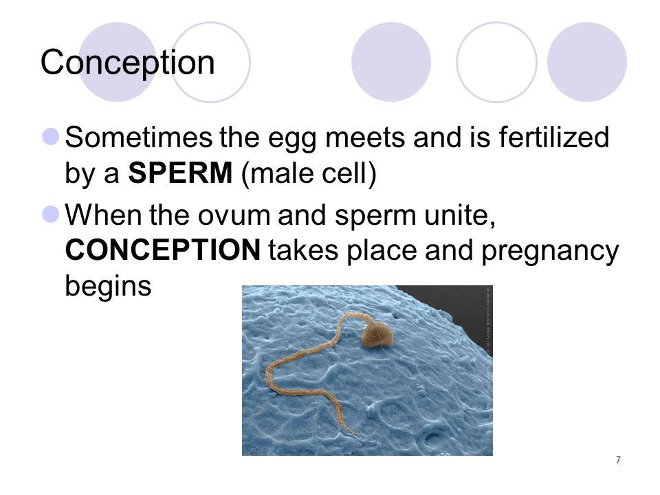Section 5-3 Problems in Prenatal Development 28