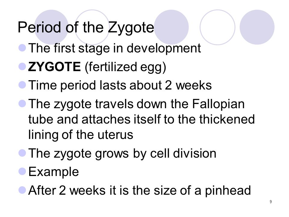 Period of the Embryo Second stage of pregnancy (EMBRYO) Develops from the 3 rd week to the 8 th 1.The mass of cells develops into all major systems of the human body- heart and lungs, bones and muscle 2.A sac filled with fluid forms around the embryo ( AMNIOTIC FLUID) 3.A tissue called the (PLACENTA) develops 4.(UMBILICAL CORD) bring nourishment and takes away waste 10