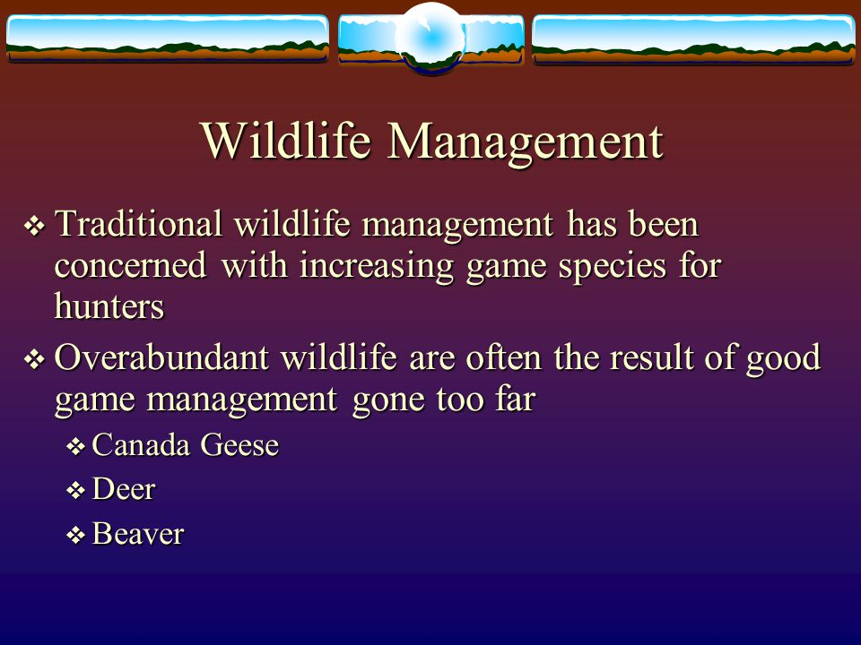 Wildlife Management  Traditional wildlife management has been concerned with increasing game species for hunters  Overabundant wildlife are often th
