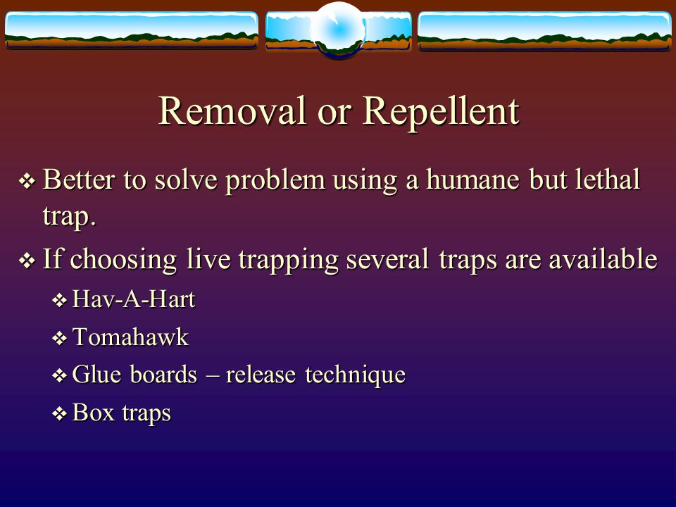  Better to solve problem using a humane but lethal trap.  If choosing live trapping several traps are available  Hav-A-Hart  Tomahawk  Glue board