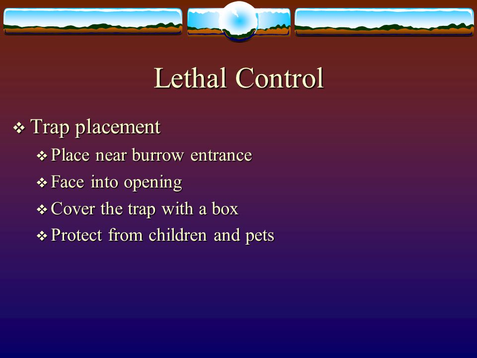  Trap placement  Place near burrow entrance  Face into opening  Cover the trap with a box  Protect from children and pets Lethal Control