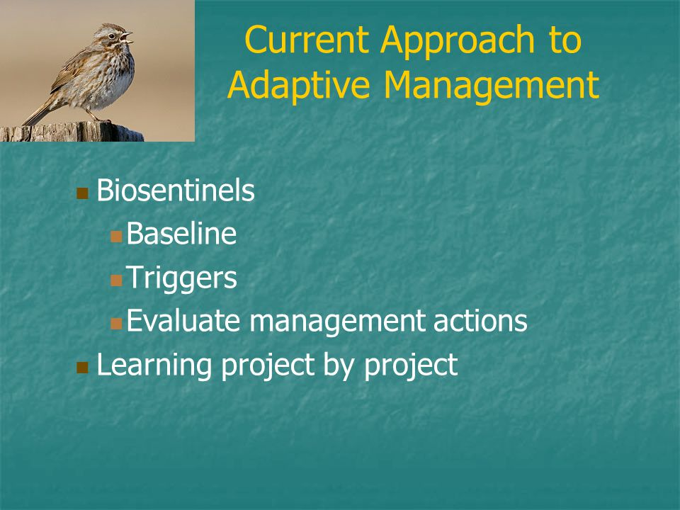 Current Approach to Adaptive Management Biosentinels Baseline Triggers Evaluate management actions Learning project by project