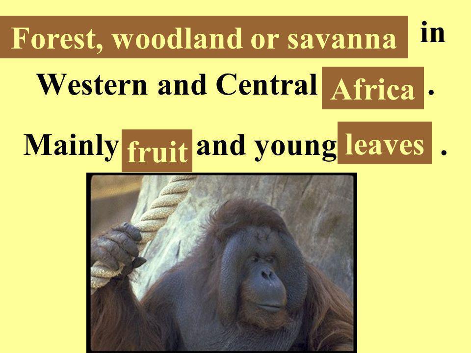 Forest, woodland or savanna in Western and Central Africa.