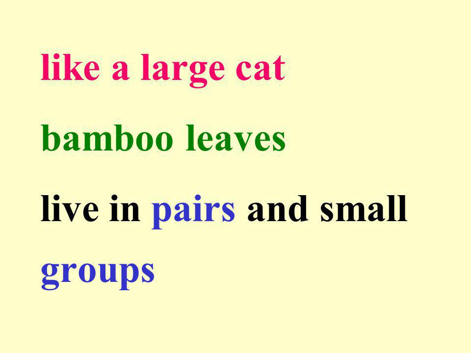 like a large cat bamboo leaves live in pairs and small groups