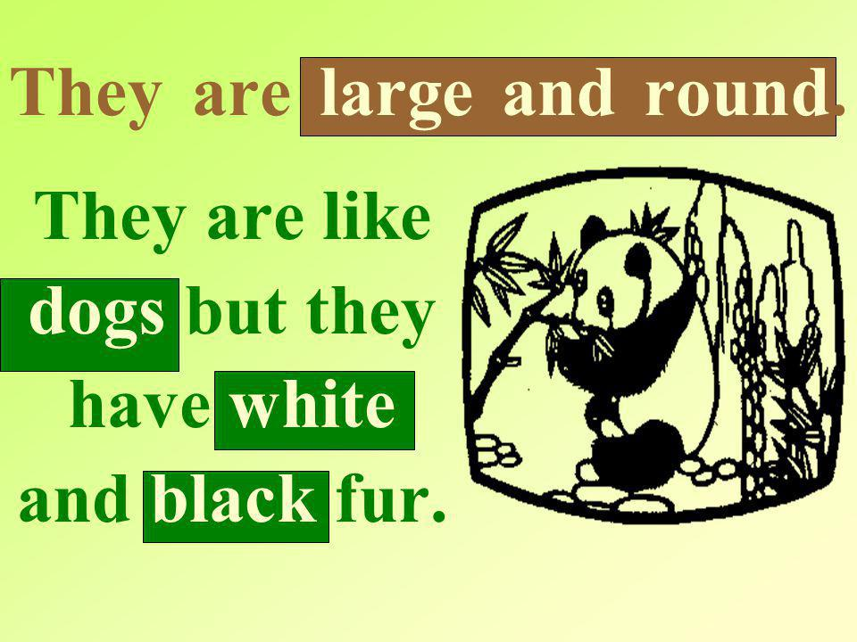 They are large and round. They are like dogs but they have white and black fur.