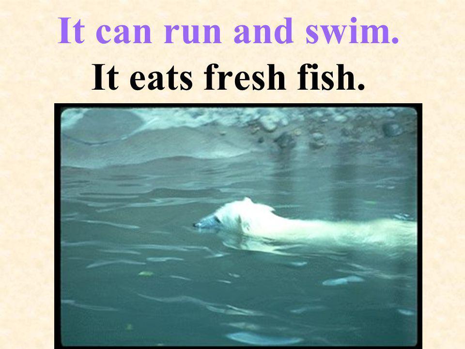 It can run and swim. It eats fresh fish.