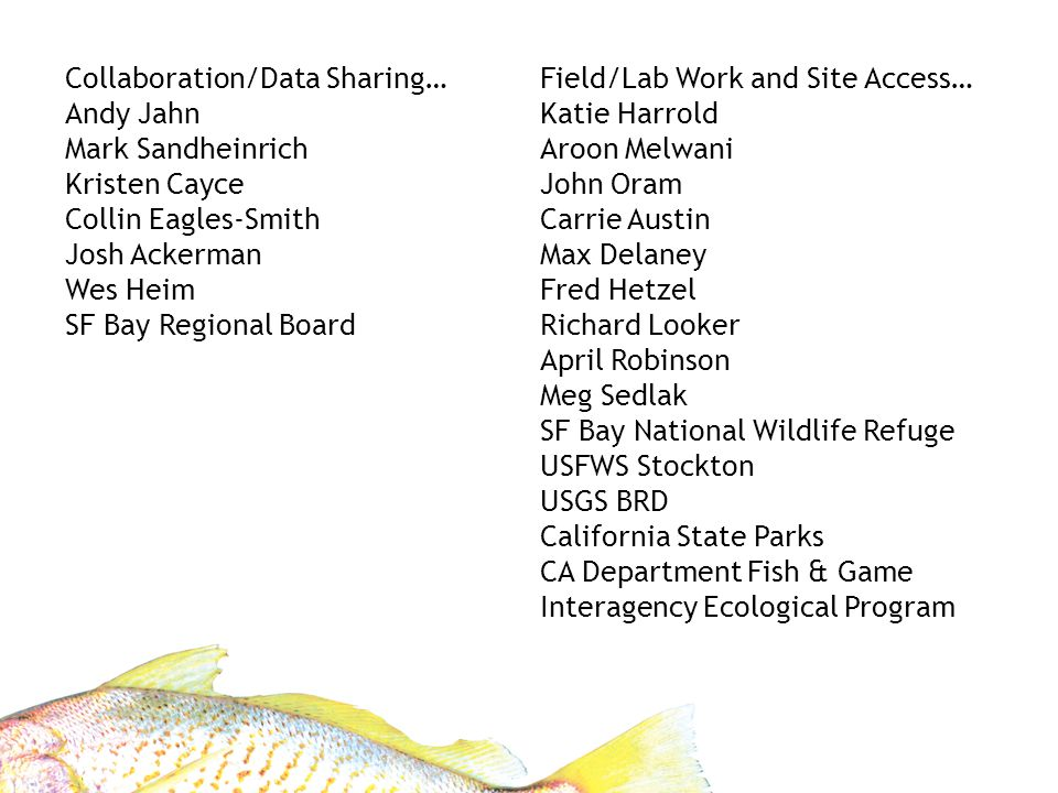 Field/Lab Work and Site Access… Katie Harrold Aroon Melwani John Oram Carrie Austin Max Delaney Fred Hetzel Richard Looker April Robinson Meg Sedlak SF Bay National Wildlife Refuge USFWS Stockton USGS BRD California State Parks CA Department Fish & Game Interagency Ecological Program Collaboration/Data Sharing… Andy Jahn Mark Sandheinrich Kristen Cayce Collin Eagles-Smith Josh Ackerman Wes Heim SF Bay Regional Board