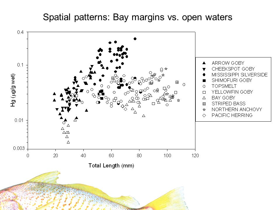 Station effect Year effect Interaction term not significant Disconnect from patterns seen in Delta/Suisun Bay (Slotton et al.) How Hg varies from year to year.
