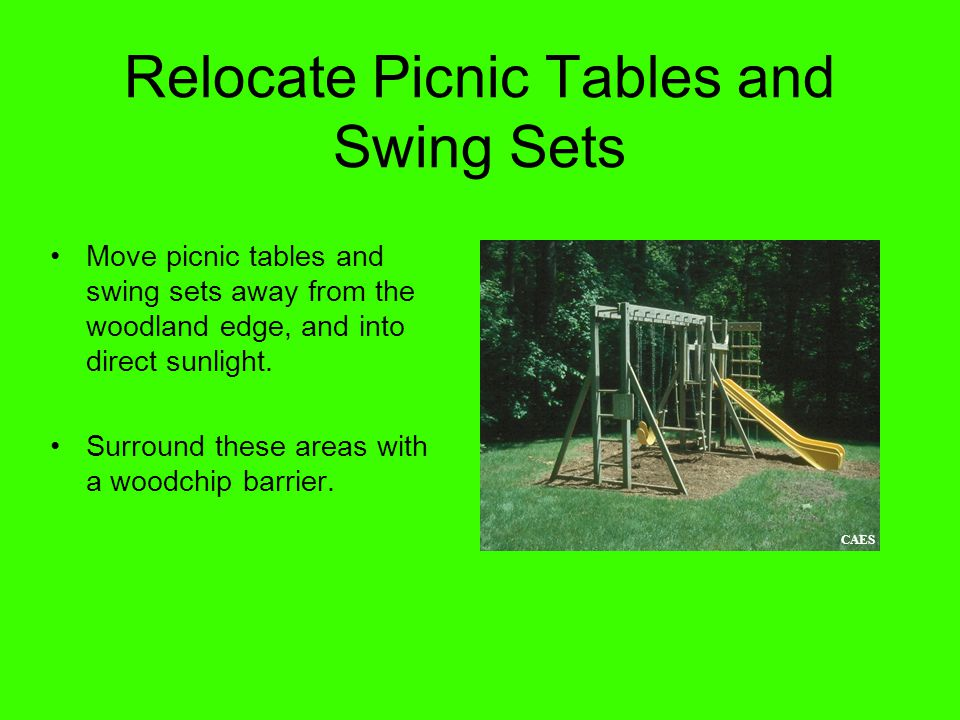 Relocate Picnic Tables and Swing Sets Move picnic tables and swing sets away from the woodland edge, and into direct sunlight.