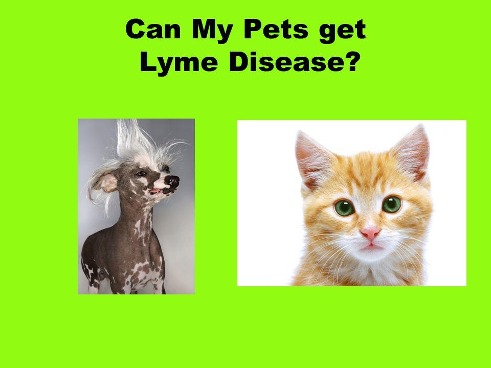 Can My Pets get Lyme Disease?