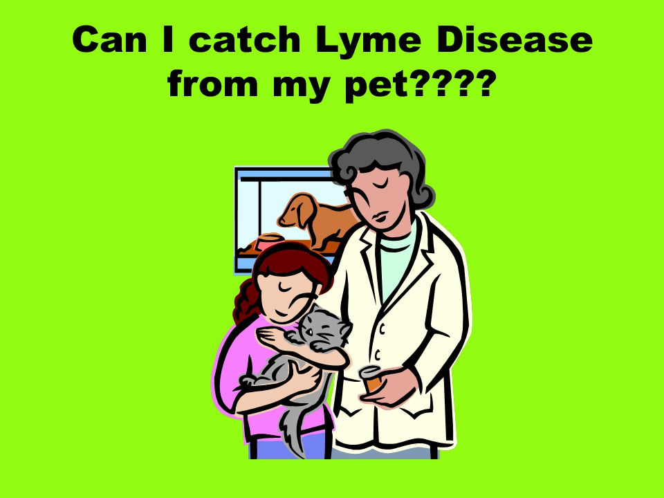 Can I catch Lyme Disease from my pet????