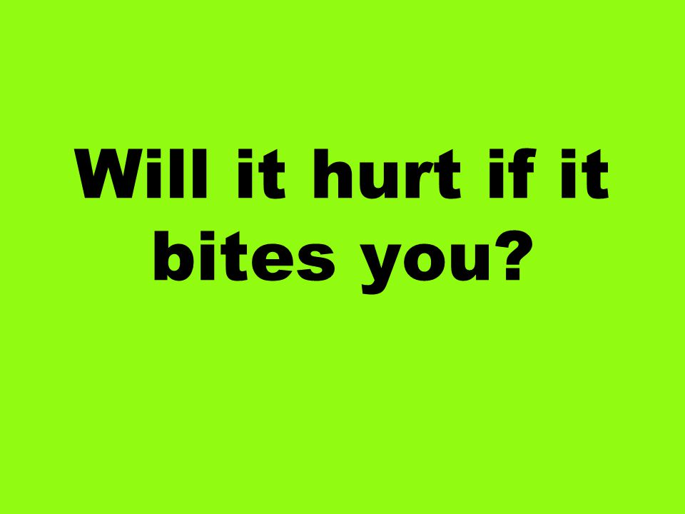 Will it hurt if it bites you?