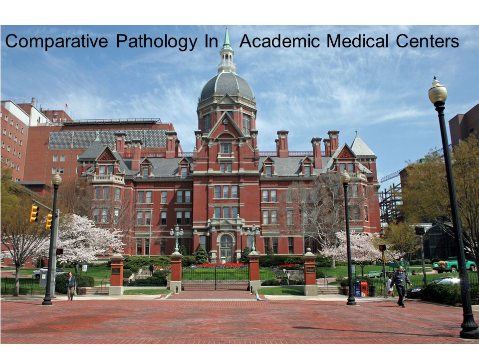 Opportunities A spectrum of classic Comparative Medicine roles Clinical diagnostic support – partnership with LAM Teaching mission – DVM, MD, PhD Collaborative research teams: experimental pathology Translational science - cutting edge interdisciplinary teams Principal Investigator role