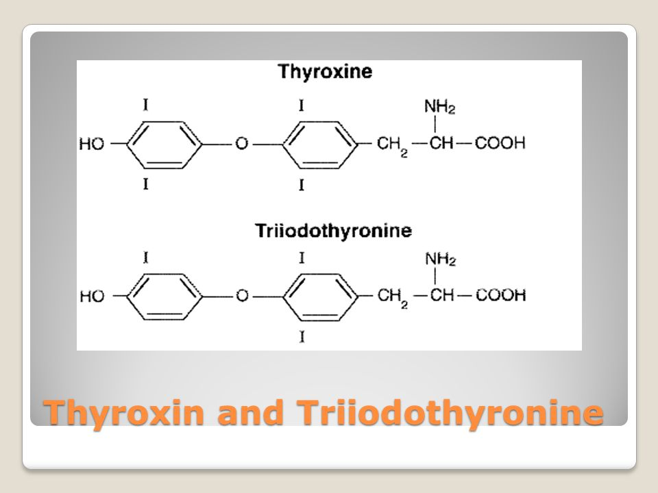 Thyroxin Thyroxin is the main hormone secreted into the blood stream by the thyroid gland.