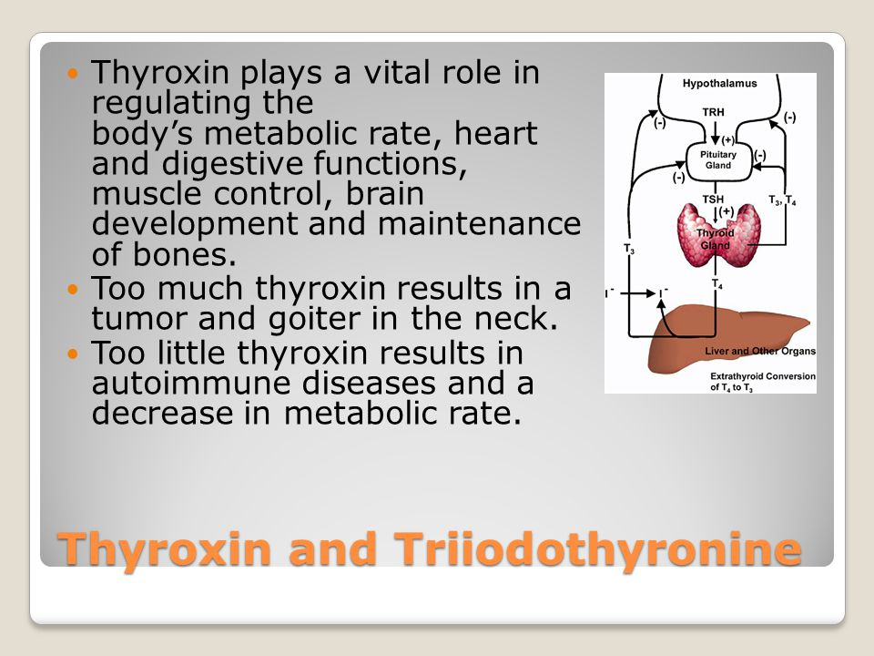 Diseases Goiters ~ A thyroid goiter is a dramatic enlargement of the thyroid gland.