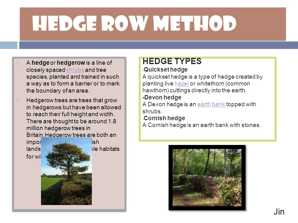 HEDGE ROW METHOD  A hedge or hedgerow is a line of closely spaced shrubs and tree species, planted and trained in such a way as to form a barrier or