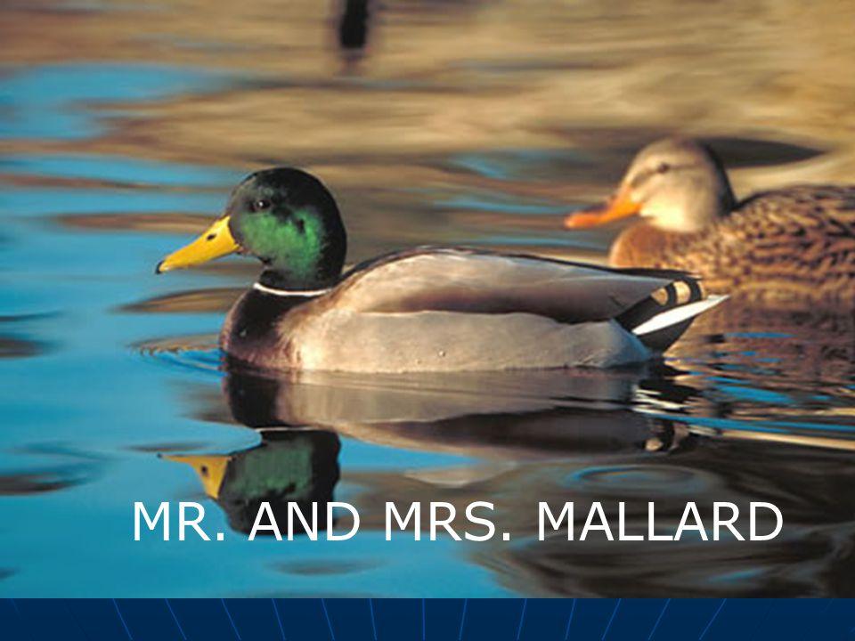 MR. AND MRS. MALLARD