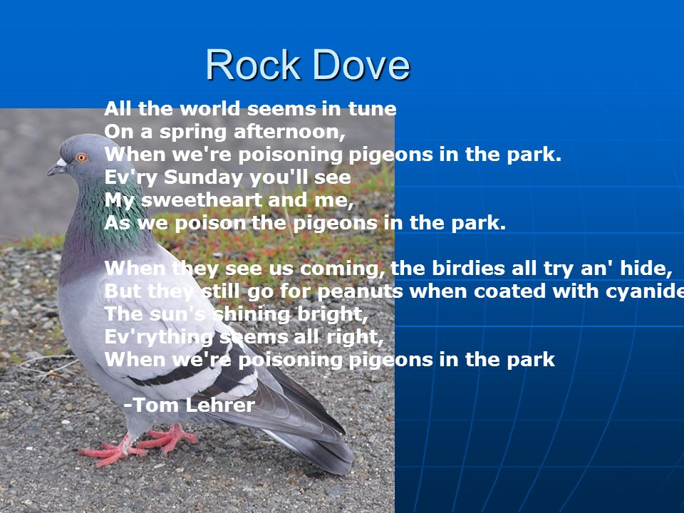 Rock Dove All the world seems in tune On a spring afternoon, When we re poisoning pigeons in the park.