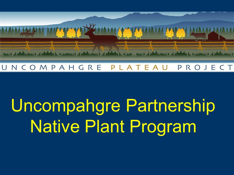 Uncompahgre Partnership Native Plant Program Landscape Scale Collaboration & Restoration in Western Colorado
